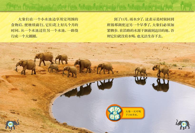 大象的旅程1