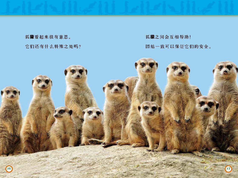 分级阅读 机警的狐獴_页面_2