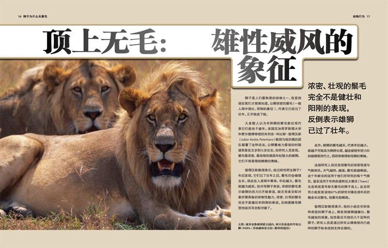 雄狮为什么长鬃毛